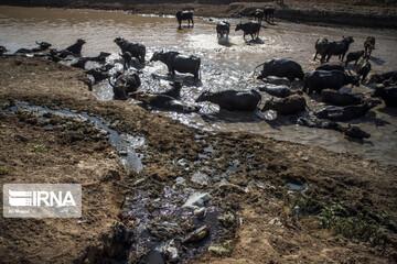 بحران آب خوزستان؛ از حرف تا عمل / در ۸ سال گذشته دولت چقدر در خوزستان سرمایهگذاری کرده است؟