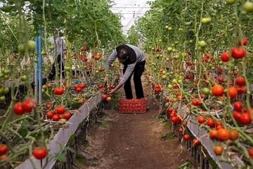 تهدید تنظیم بازار محصولات کشاورزی با قطعی برق / تلفات سنگین قطعی برق بر تولید مرغ