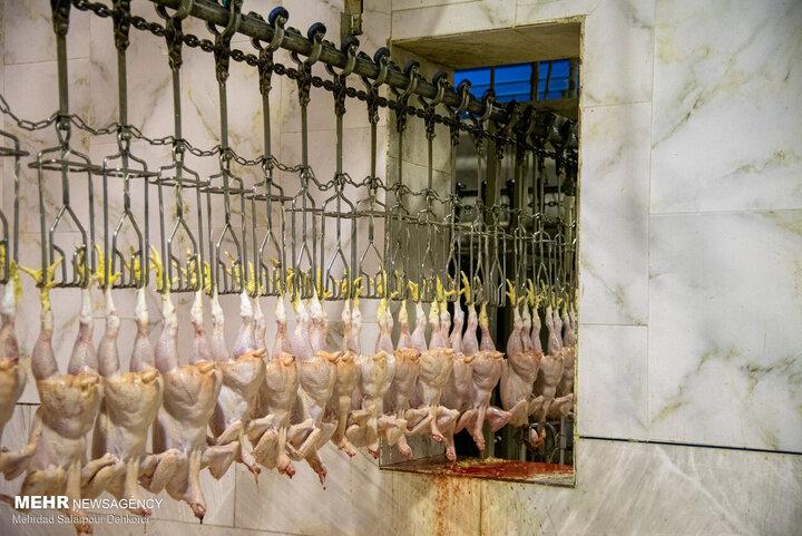 گرانی مرغ قابل پیش بینی بود / دولت دلال بزرگ است!