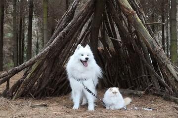 دوستی جالب سگ و گربه سفید رنگ و زیبا / فیلم