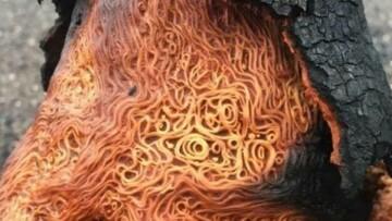 حقایقی جالب و خواندنی درباره عجیبترین گیاهان و حیوانات؛ از درخت اسپاگتی تا حلزون غول پیکر / تصاویر