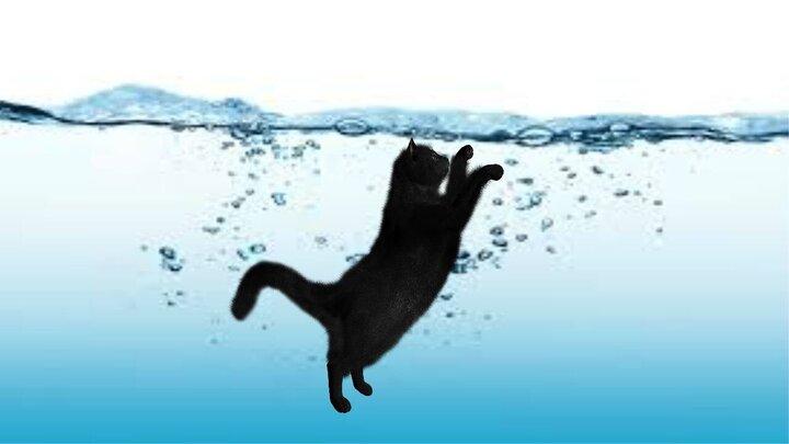 لحظه نجات گربه از غرق شدن توسط شهروند سوری / فیلم