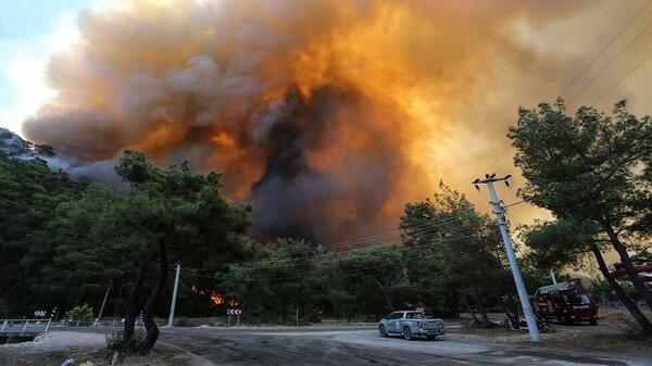 مناطق آسیبدیده از آتشسوزی جنگلهارا منطقه فاجعه اعلام کردهایم