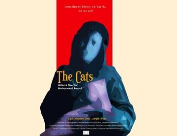 راهیابی فیلم کوتاه «گربهها» به یک جشنواره آمریکایی