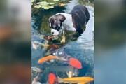 ویدیو تماشایی از لحظه بوسیدن سگ توسط ماهیها! / فیلم