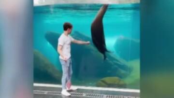 دوستی جالب پسر جوان با شیر دریایی / فیلم