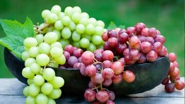 فواید فراوان انگور برای بدن؛ از کاهش چربی خون تا پیشگیری از پوکی استخوان