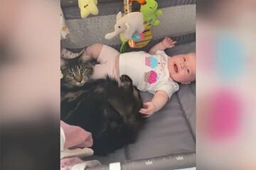 پرستاری گربه مهربان از بچه انسان / فیلم