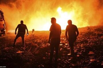 ویدیو غمانگیز از لحظه فرار لحظهآخری سه گوزن از آتش!  / فیلم
