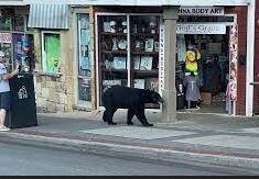 ورود خرس گرسنه به رستوران / عکس