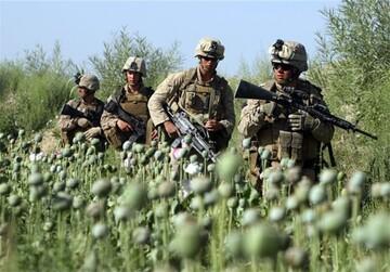 کشت موادمخدر افغانستان در حضور نظامیان آمریکا و ناتو به اوج رسید