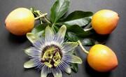 خواص میوه گل ساعتی