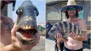 ماهی عجیبی که دندانهایش شبیه به انسان است / عکس