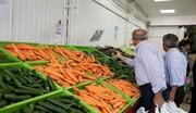 هویج باز هم گران شد / علت گرانی عجیب هویج چیست؟