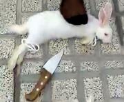 حیوانکشی زنان به سلیقه و سفارش مشتری! / تصاویر تکاندهنده