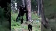 لحظه دیدنی فرار خرس ترسو از دست گربه شجاع / فیلم