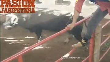لحظه پراسترس حمله گاو وحشی به تماشاچیان / فیلم