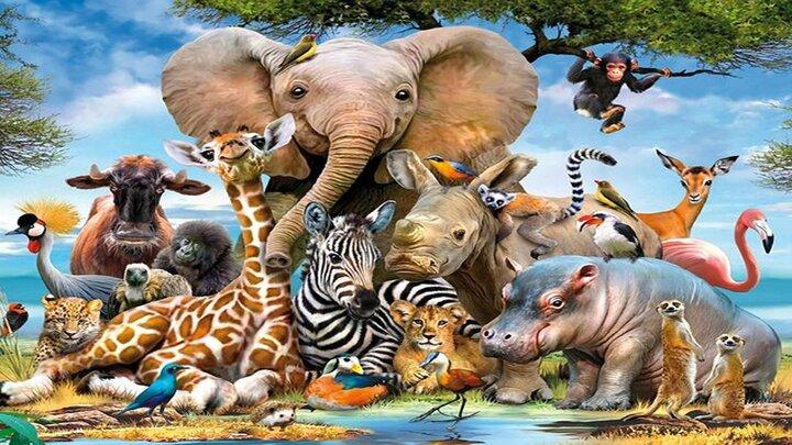 حقایقی جالب و عجیب درباره حیواناتی که با هم نسبت فامیلی دارند! / تصاویر