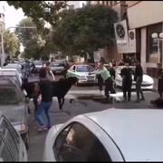 ویدیویی از شلیک پلیس به گوساله فراری که قرار بود قربانی شود!