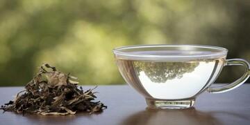 پاکسازی ریه در دوران کرونا با این چای پرخاصیت