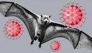 ویدیویی تماشایی از لحظه ورود ویروس کرونا به سلولهای مغزی خفاش