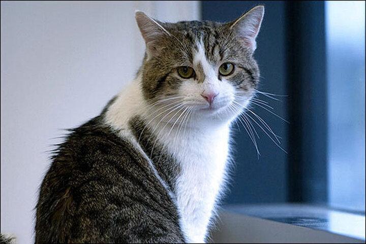 لحظه احساسی نجات گربه در حال سقوط / فیلم