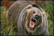 نجات جان جوان ایلامی پس از حمله خرس در ارتفاعات دینارکوه آبدانان