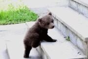 پیدا شدن عجیب سر و کله یک بچه خرس در مدرسهای در هرمزگان! / فیلم