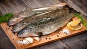 خشکسالی تولید ماهی را کاهش داد / قیمت هر کیلو قزل آلا چند؟