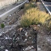 کشف جسد پتوپیچی شده در میدان نماز شهریار تهران / فیلم