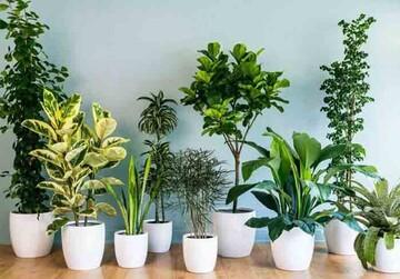 گیاهان مفید برای تأمین اکسیژن خانه در دوران نقاهت بیماری کرونا