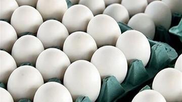 قیمت هر شانه تخم مرغ به ۸۰ هزار تومان می رسد؟