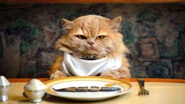 ویدیو پربازدید از رستوران لاکچری که برای حیوانات منوی غذا دارد!