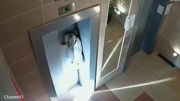 نجات جان سگ گیرافتاده در میان درب آسانسور / فیلم
