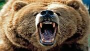 فرار جالب خرس ترسو از دست سگ خانگی / فیلم