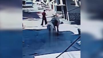 لحظه حمله وحشیانه یک گاو به دختر جوان / فیلم