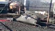 ۱۲ راس گاو در خوزستان زنده زنده سوختند / فیلم
