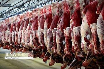 روش جدید دامداران برای فروش دام های خود / قیمت هر کیلو گوشت قرمز چند؟