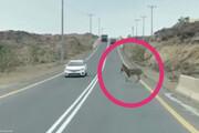 مچاله شدن خودرو ساندرو پس از تصادف وحشتناک با الاغ ؛ یک کشته چهار مصدوم / عکس