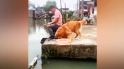 دلسوزی جالب یک سگ برای نجات جان ماهی! / فیلم