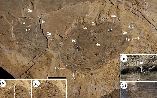 عکس| کشف جانور مرموز متعلق به ۵۰۰ میلیون سال قبل