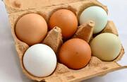 قیمت تخم مرغ باز هم گران شد / هر تخم مرغ ۲ هزار تومان