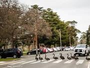 قدم زدن قوها بر روی خط عابر پیاده در استرالیا / عکس