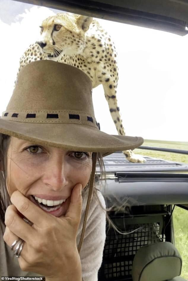 اقدام خطرناک زن جهانگرد با یوزپلنگ که میتوانست به قیمت جانش تمام شود! / تصاویر