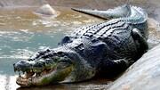 ویدیو تماشایی و عجیب از رفاقت پیرمرد با تمساح