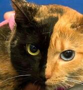 عکسی از عجیبترین گربه دنیا