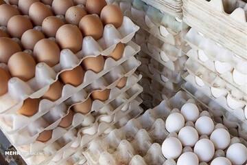 چرا قیمت هر شانه تخم مرغ از ۵۰ هزار تومان گذشت؟