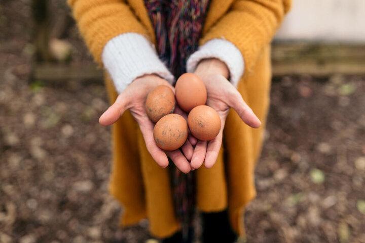نحوه تشخیص تخم مرغ تازه از کهنه