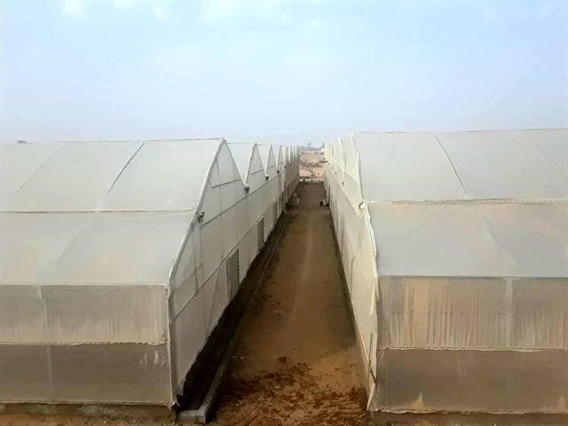 احداث گلخانه سبزی و صیفی در استان بوشهر با حمایت بانک کشاورزی