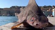 صید عجیبترین ماهی دنیا که تا به حال ندیدهاید! / عکس
